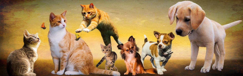 Der tierische Blog